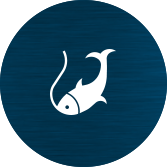 fishinf